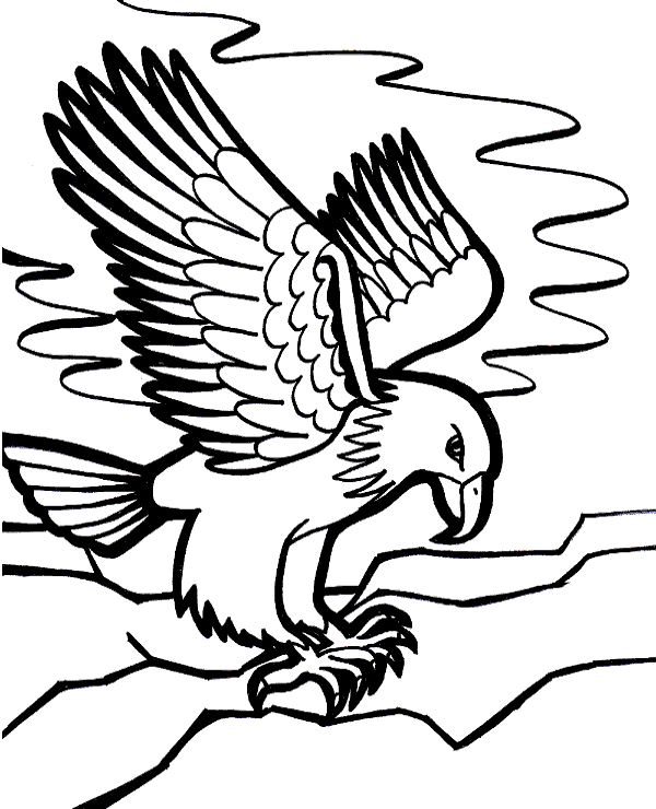 eagle colouring pictures printable eagle coloring pages for kids cool2bkids pictures colouring eagle