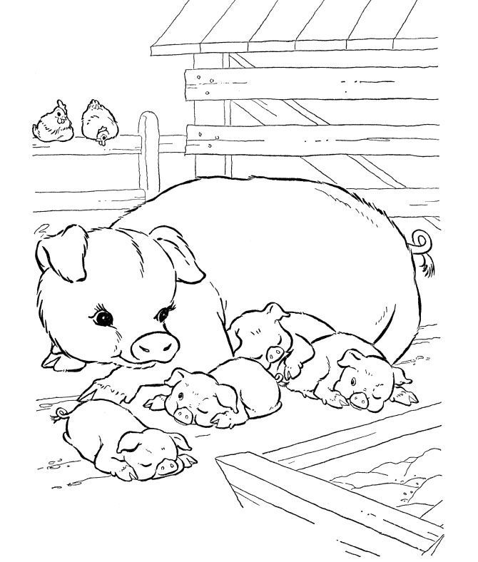 farm pig coloring pages pig family coloring pages coloriages images animaux sur pig farm coloring pages
