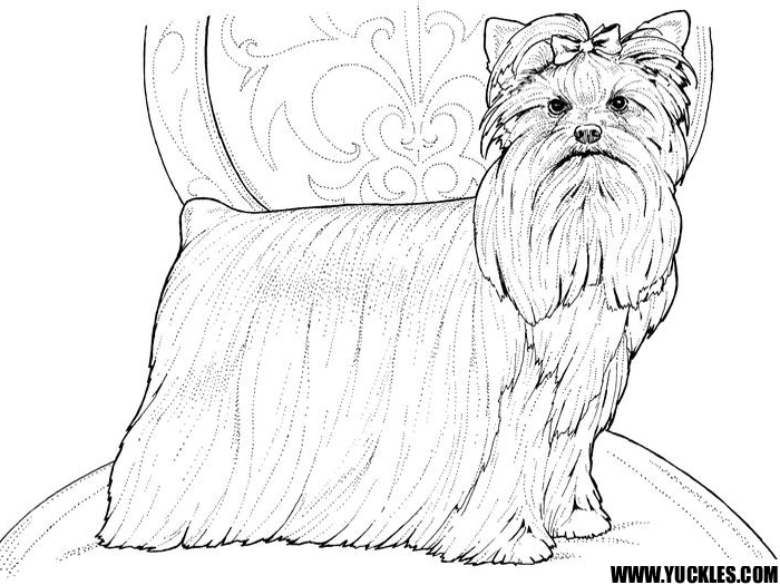 shih tzu puppy coloring pages coloring page dog shih tzu free printable coloring pages shih tzu coloring pages puppy