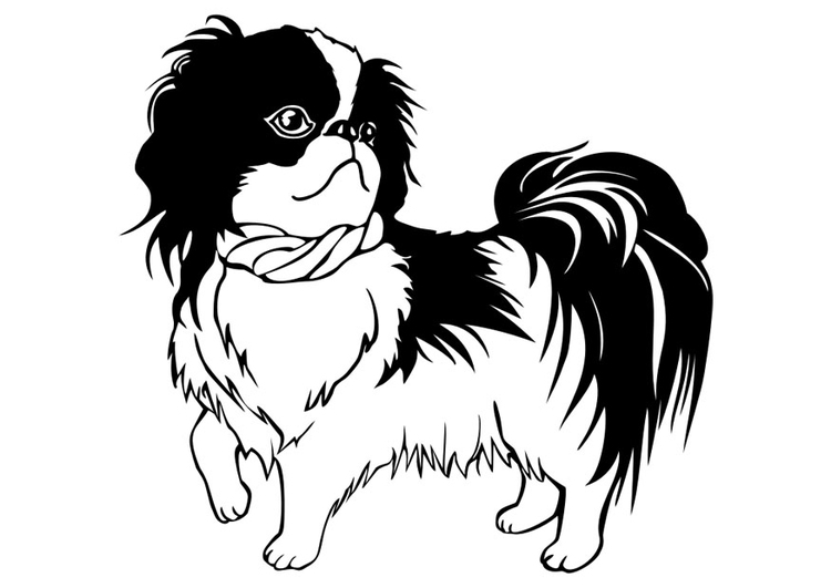 shih tzu puppy coloring pages dog breed coloring pages hubpages puppy tzu pages coloring shih