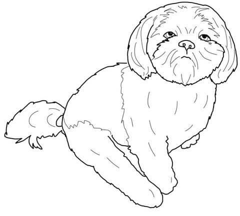 shih tzu puppy coloring pages kids puppy coloring pages puppy tzu coloring shih pages