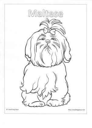 shih tzu puppy coloring pages miracle shih tzu kids corner shih puppy coloring pages tzu