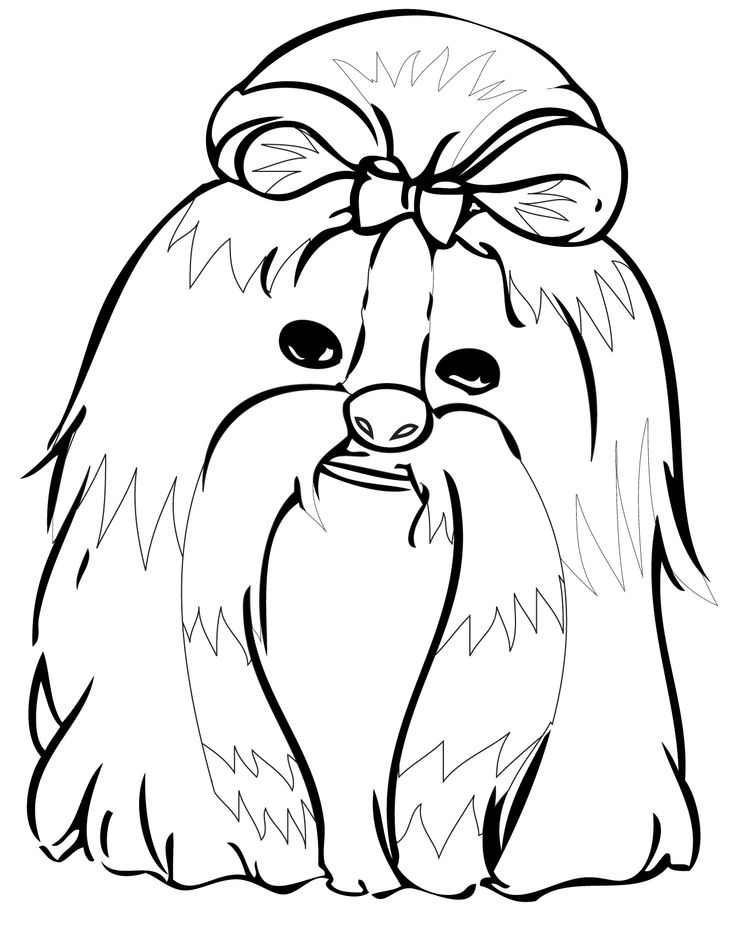 shih tzu puppy coloring pages shih tzu coloring page dog coloring page coloring pages tzu shih puppy pages coloring
