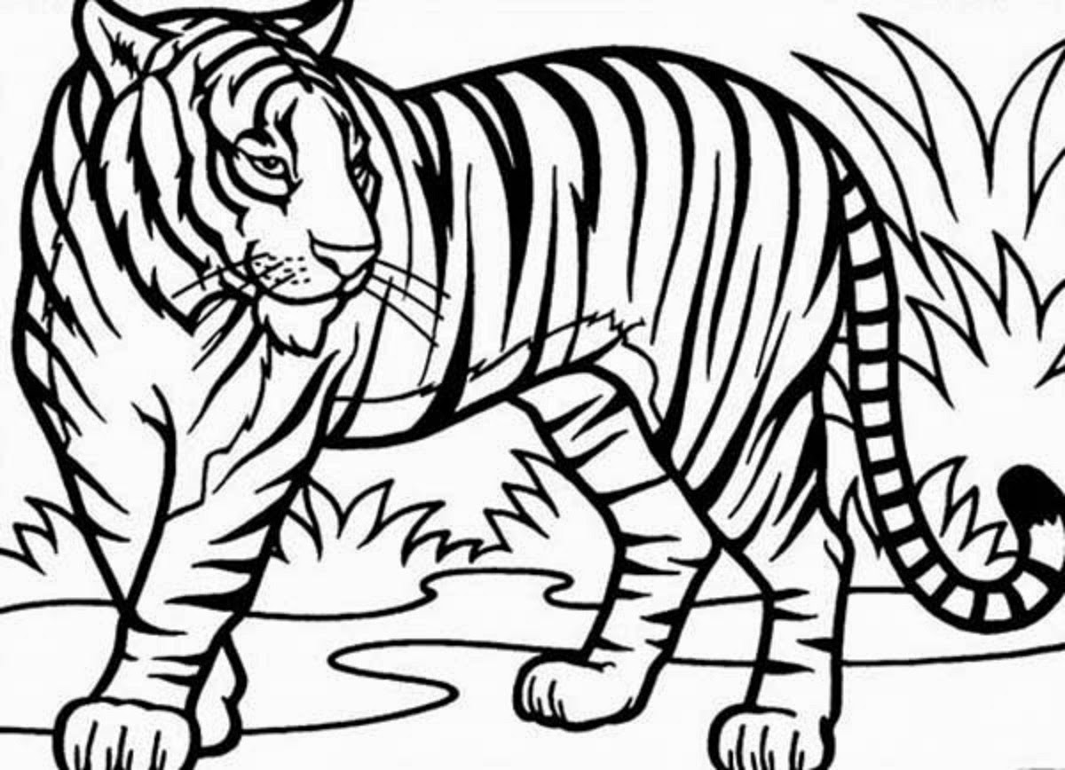 tiger coloring pages colours drawing wallpaper cute tigger for kids colour coloring pages tiger