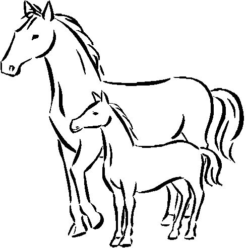 baby horse coloring pages baby horse coloring page free printable coloring pages pages baby horse coloring