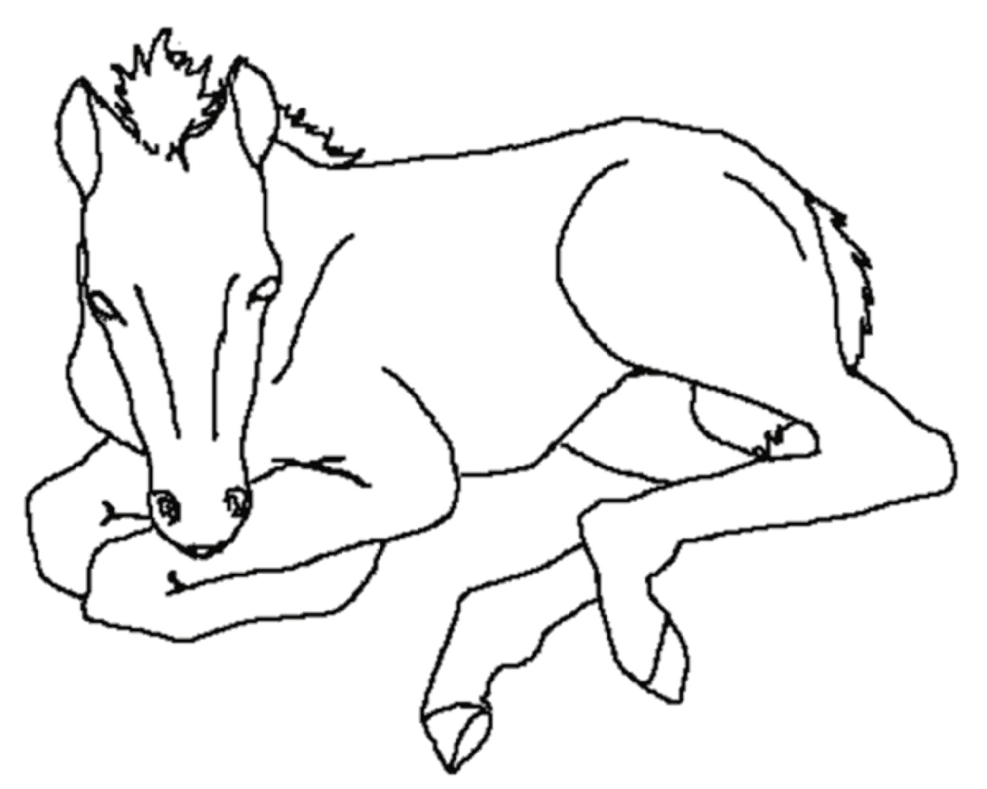 baby horse coloring pages baby horse drawing at getdrawingscom free for personal pages baby horse coloring