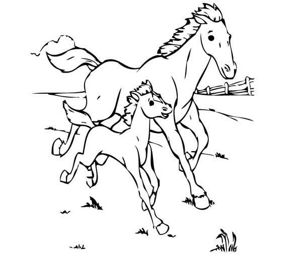 baby horse coloring pages mommy baby horse coloring pages coloring pages for kids horse baby coloring pages