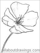 california state flower 50 state flowers coloring pages for kids flower california state
