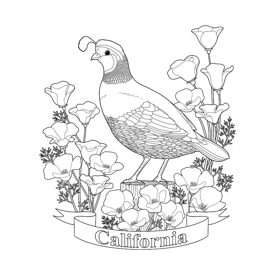 california state flower california state bird and flower coloring page digital art state california flower