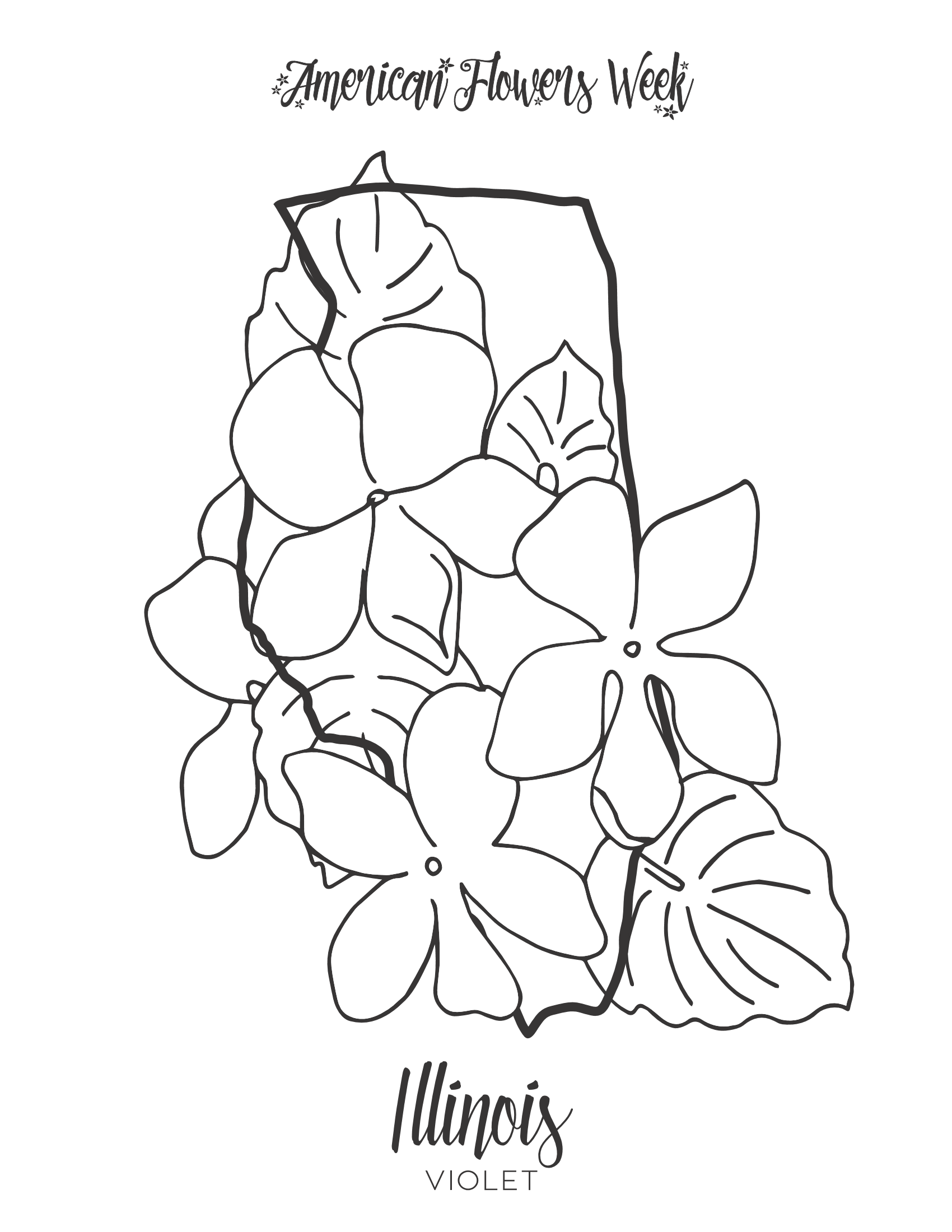 california state flower california state symbols coloring page free printable state flower california
