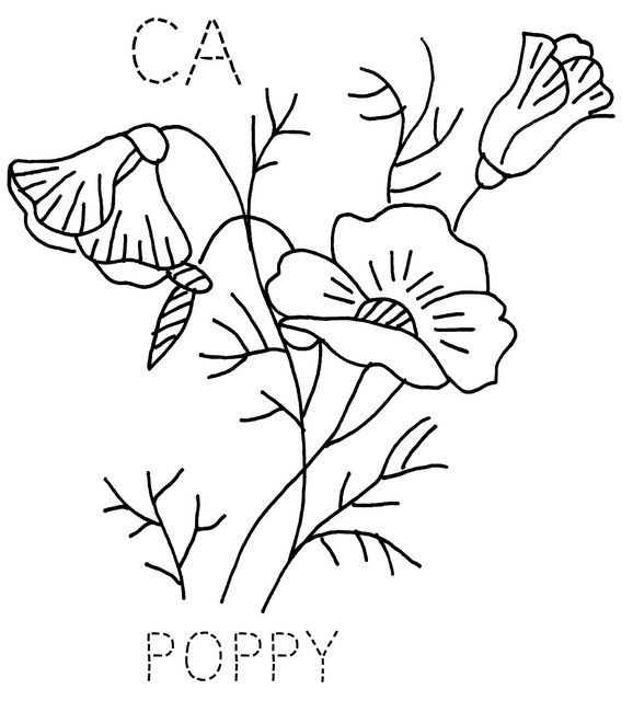 california state flower images of state flowers coloring pages google search state flower california