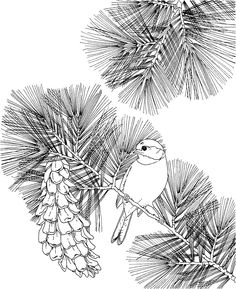 california state flower state flower coloring pages hawaii state flower coloring state flower california
