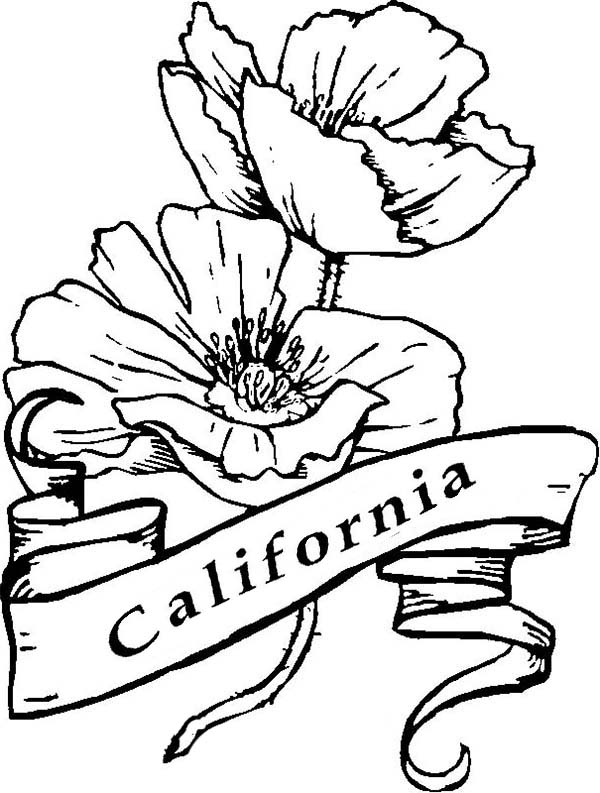 california state flower state of california drawing at getdrawingscom free for flower state california