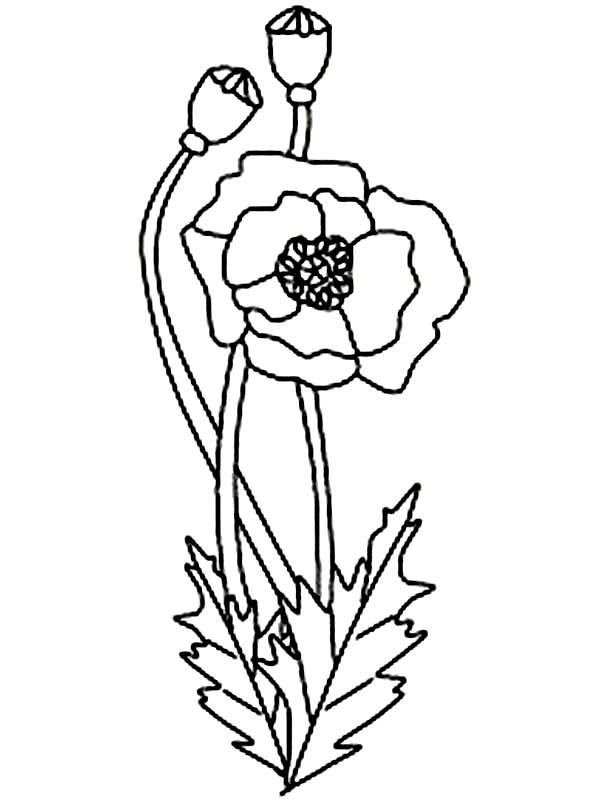 california state flower state of california drawing at getdrawingscom free for state california flower