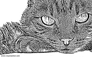 cat face coloring page black and white cat face clipart best face page cat coloring