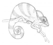 chameleon drawings chameleon drawing amazing wallpapers drawings chameleon