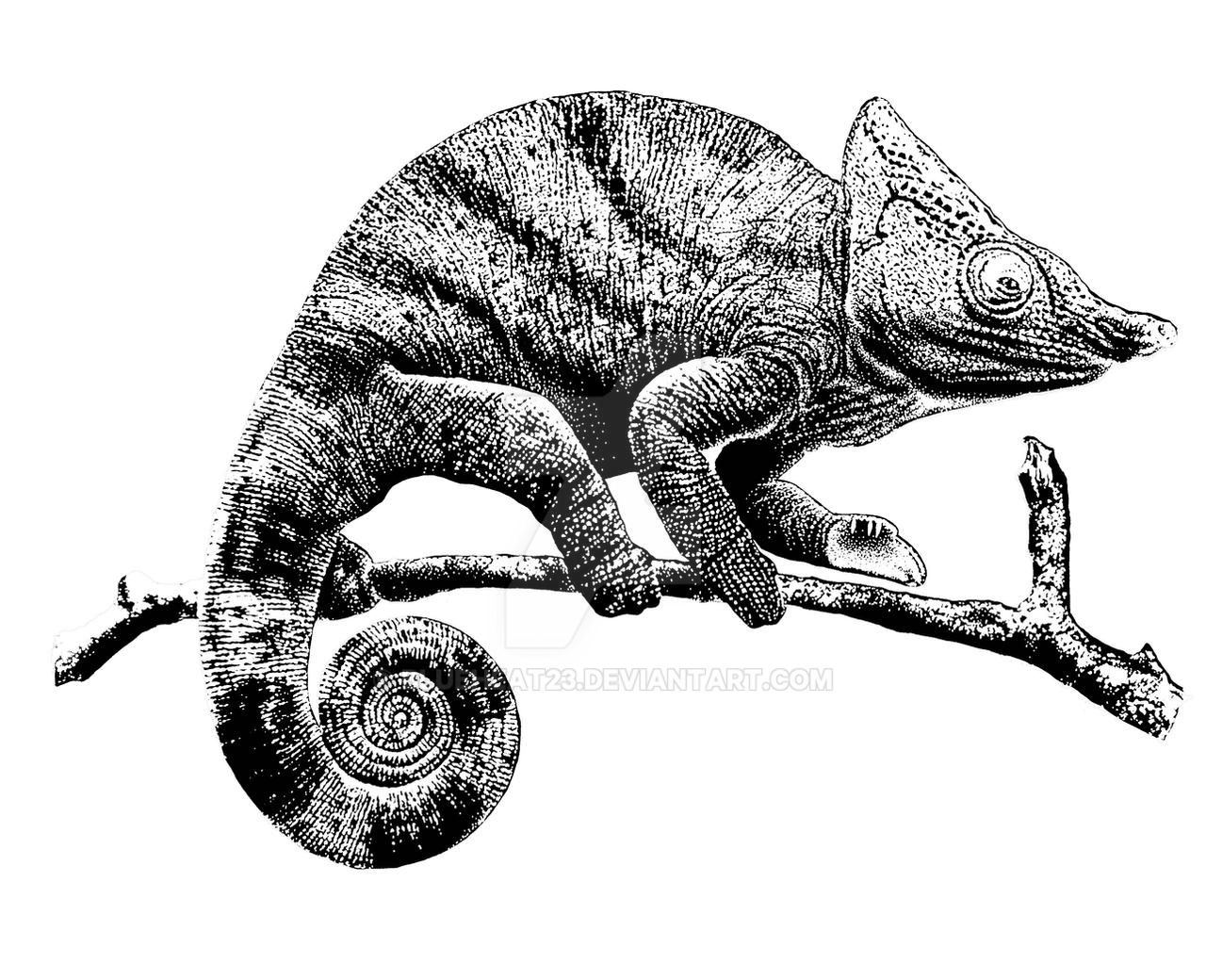 chameleon drawings flap necked chameleon coloring pages hellokidscom drawings chameleon