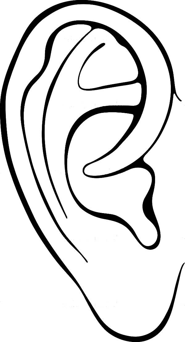 coloring ear coloring page ear free printable coloring pages ear coloring