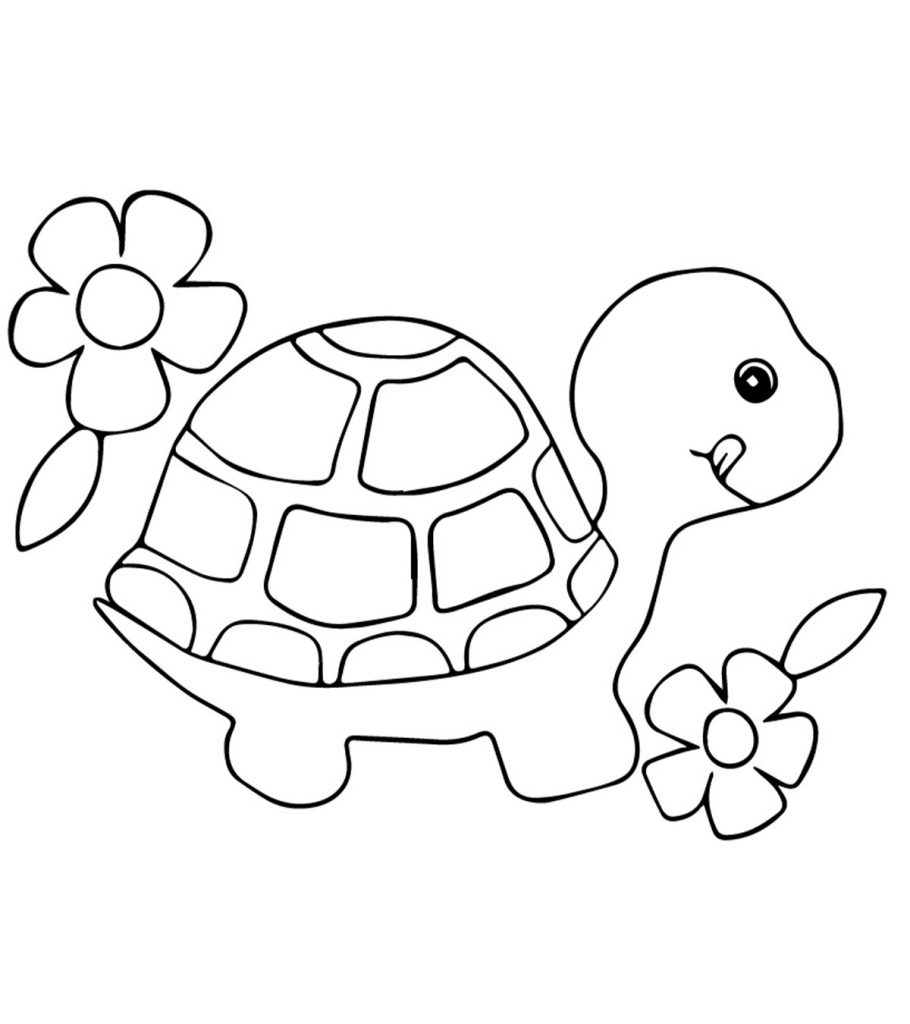 coloring sheet turtle line drawing turtle at getdrawingscom free for personal sheet coloring turtle