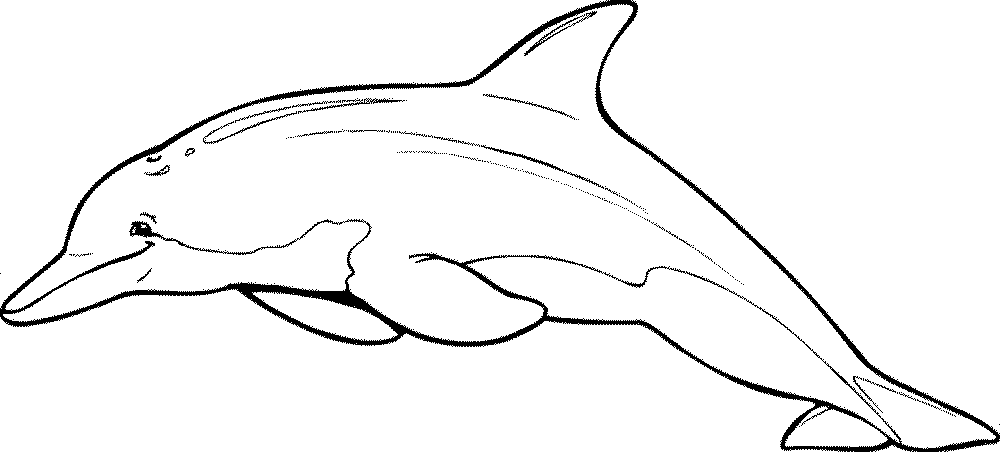 dolphin coloring pages free animal coloring pages momjunction pages dolphin coloring free