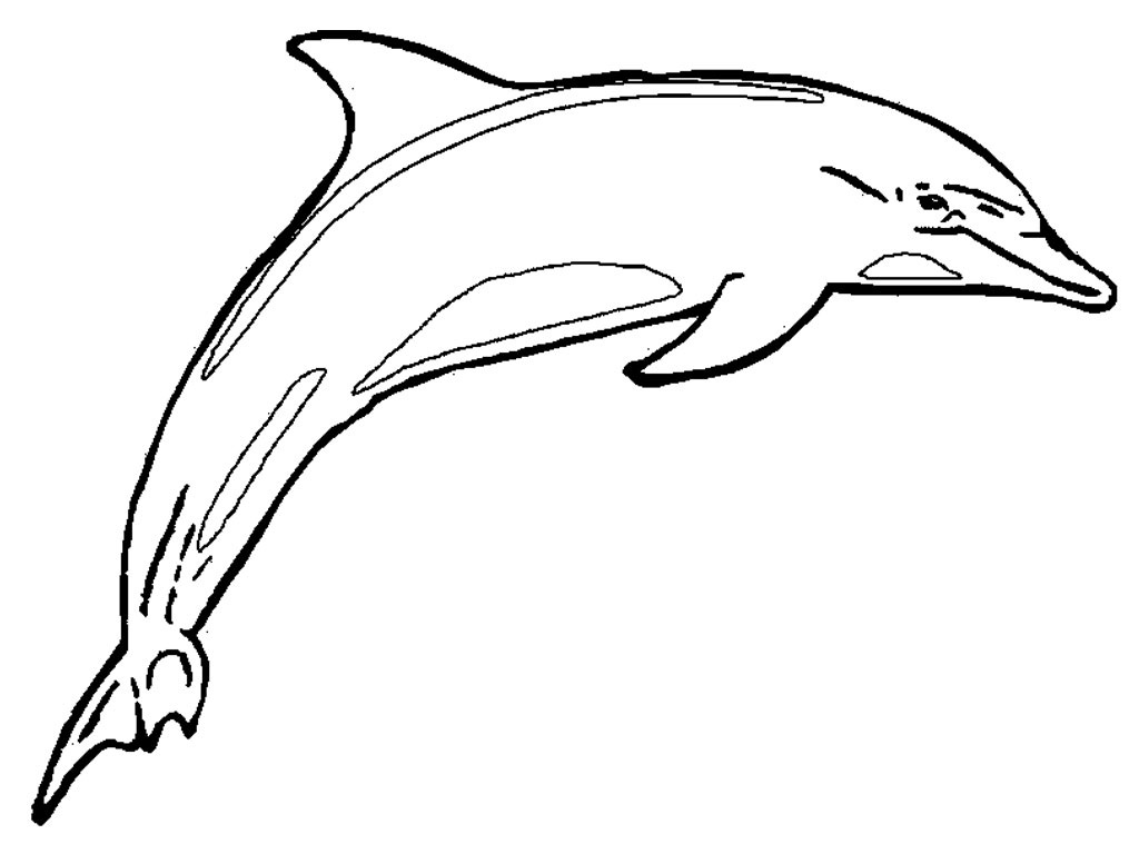 dolphin coloring pages free free coloring pages of dolphins to the print free dolphin coloring pages