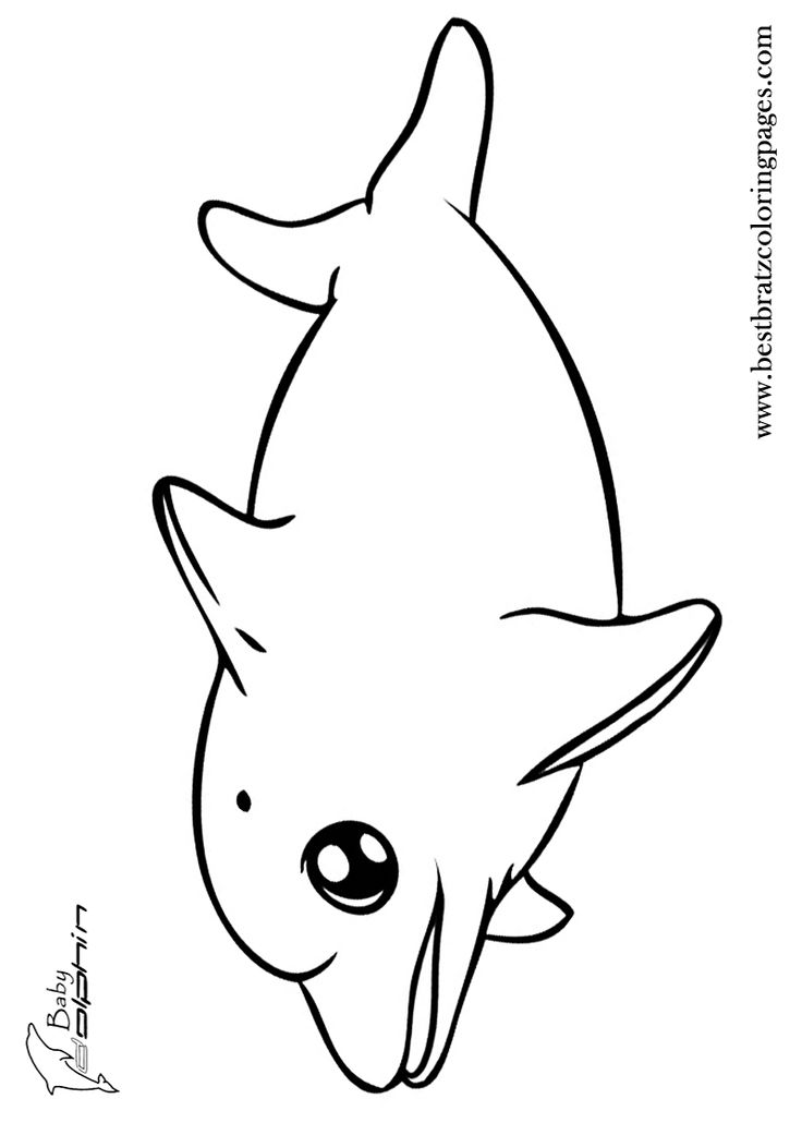 dolphin coloring pages free free printable dolphin coloring pages for kids dolphin free pages coloring