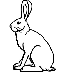 hare coloring pages hare 9 coloring page free printable coloring pages coloring hare pages