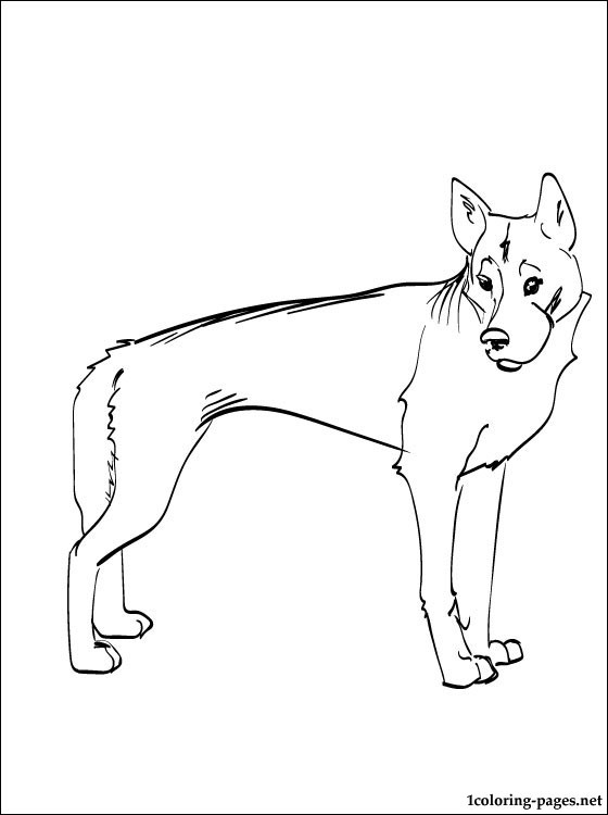 how to draw a dingo step by step dingo drawing at getdrawings free download step by step to how draw a dingo