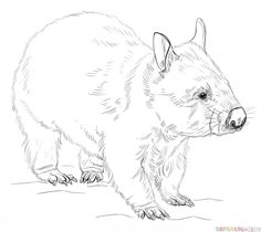 how to draw a dingo step by step dingo from australia coloring page supercoloringcom a dingo how draw to step by step