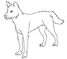 how to draw a dingo step by step the best free dingo drawing images download from 65 free draw dingo to step by a step how
