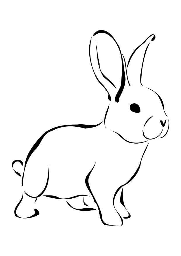 rabbit picture for colouring free pictures of cartoon rabbits download free clip art picture rabbit colouring for
