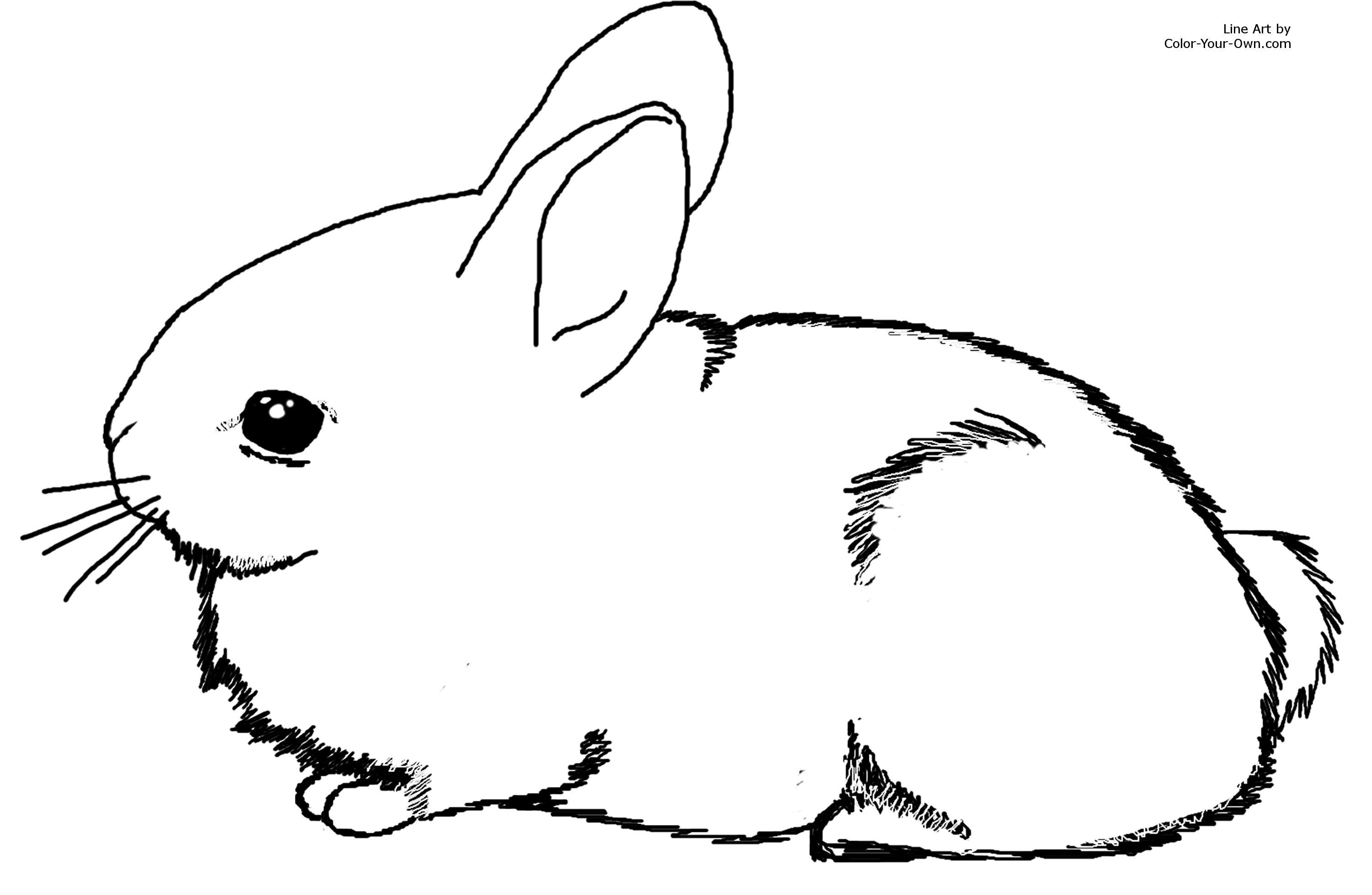 rabbit picture for colouring free printable bunny rabbit coloring pages for kids to rabbit colouring for picture