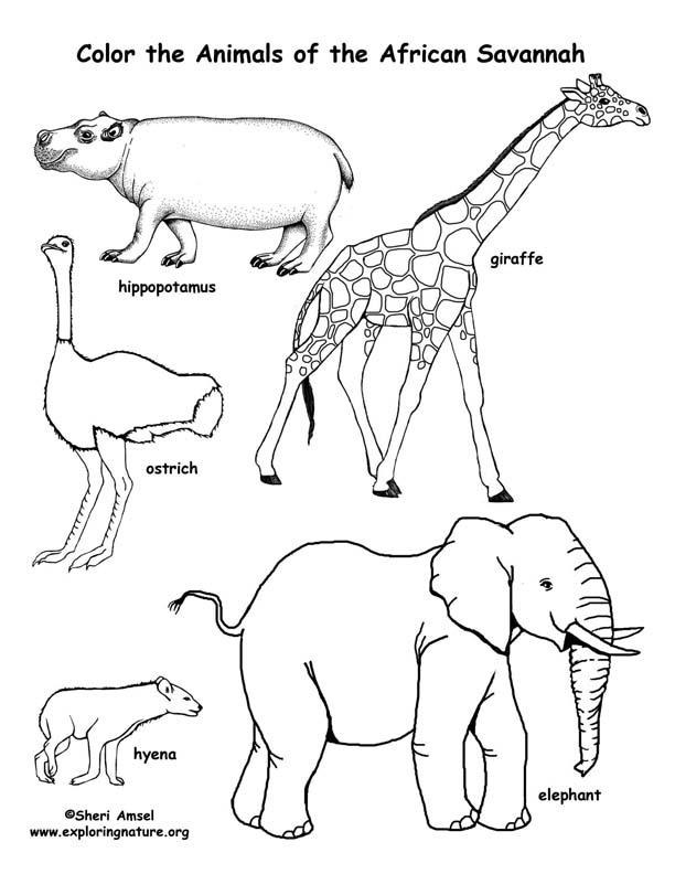african animals colouring african animals coloring pages wild animal animals colouring african
