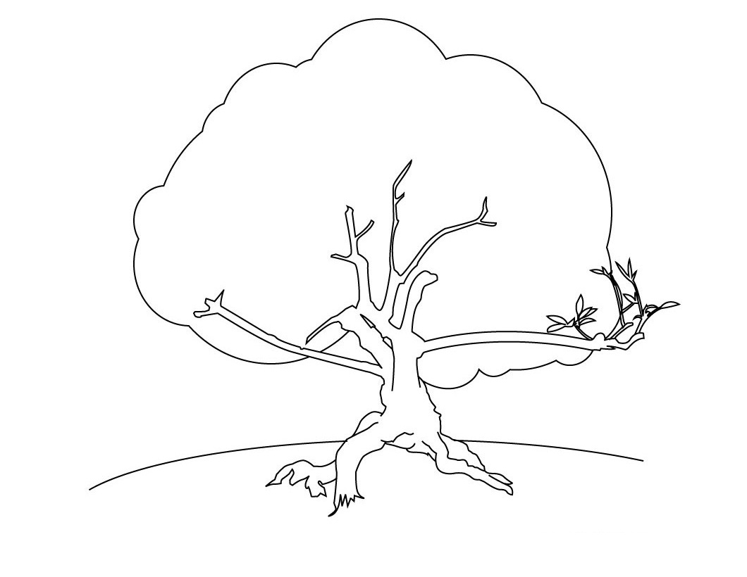 african tree coloring page printable african tree template coloring african tree page