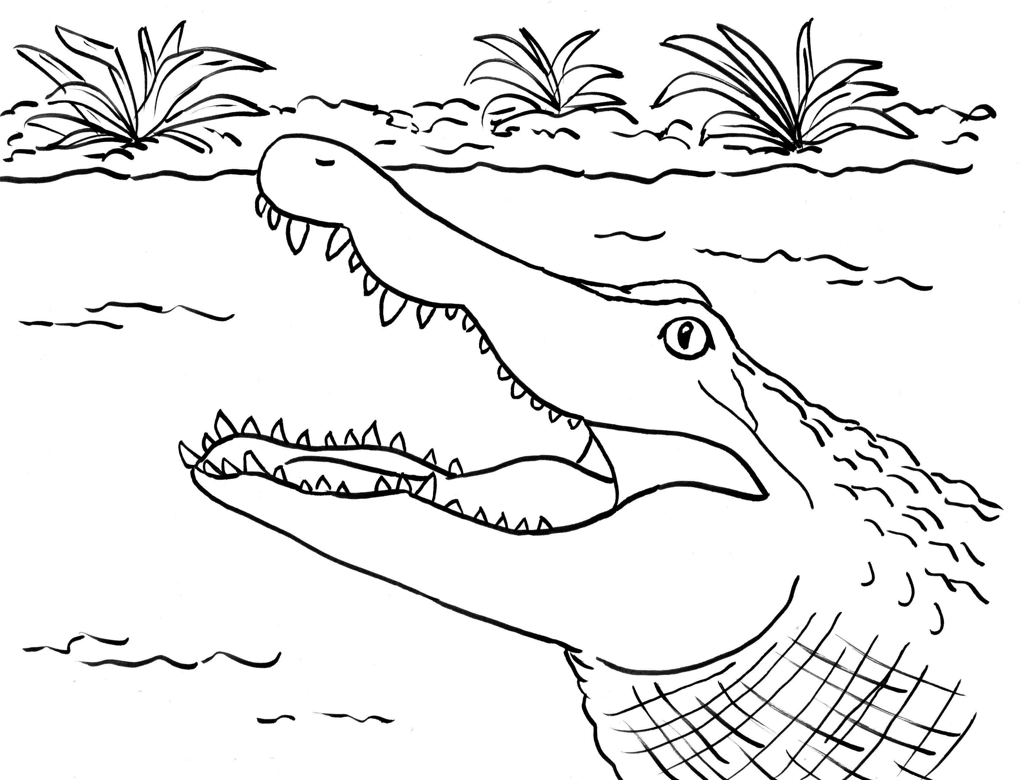 alligator coloring pages free printable crocodile coloring pages for kids alligator coloring pages