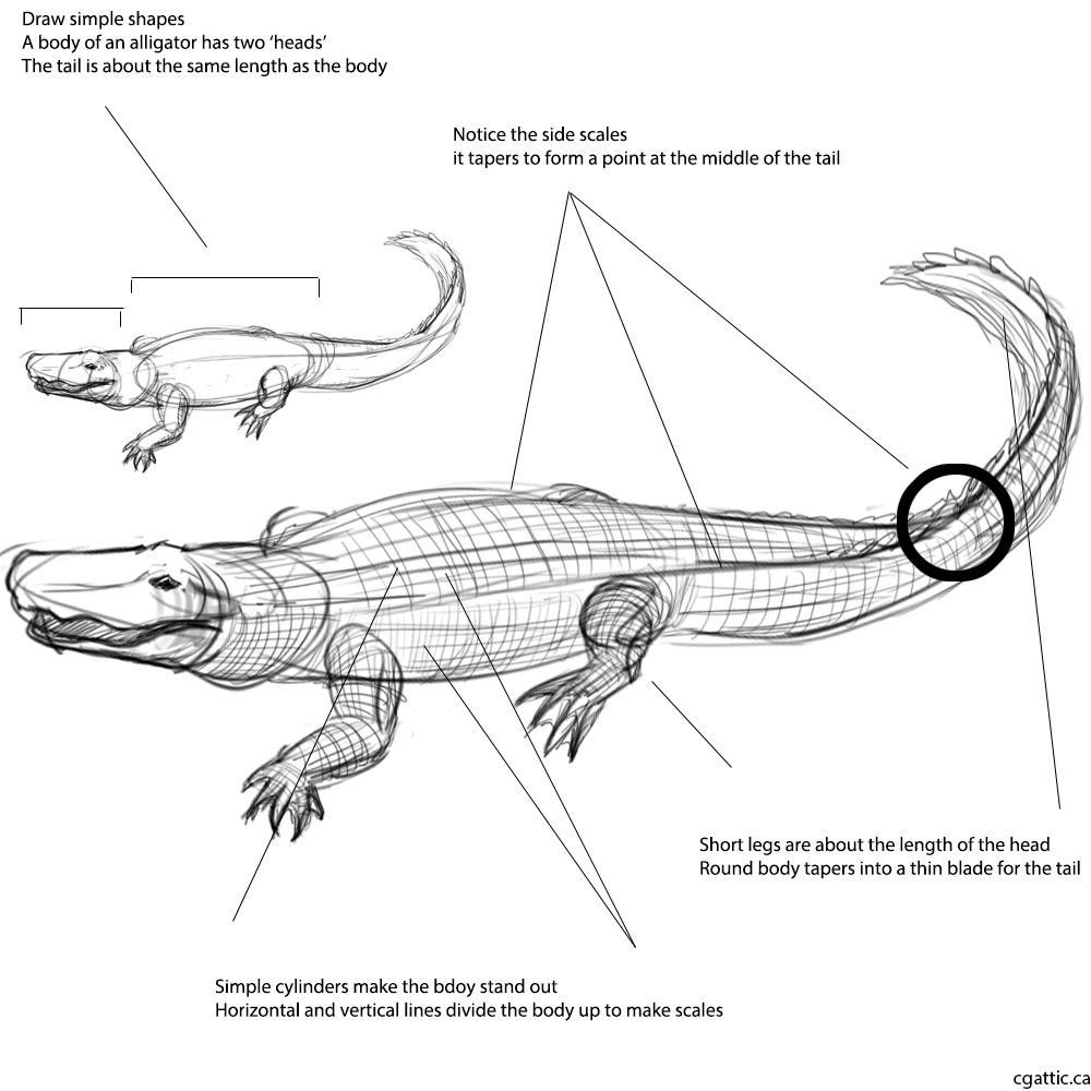 alligator drawing alligator how to draw alligator easy alligator drawing alligator drawing