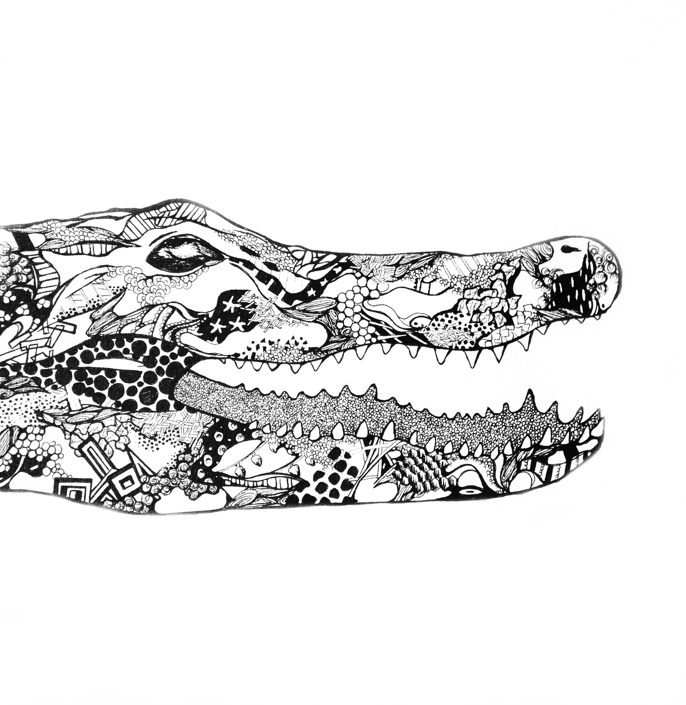 alligator drawing cartoon pictures how to draw an alligator in 6 steps drawing alligator