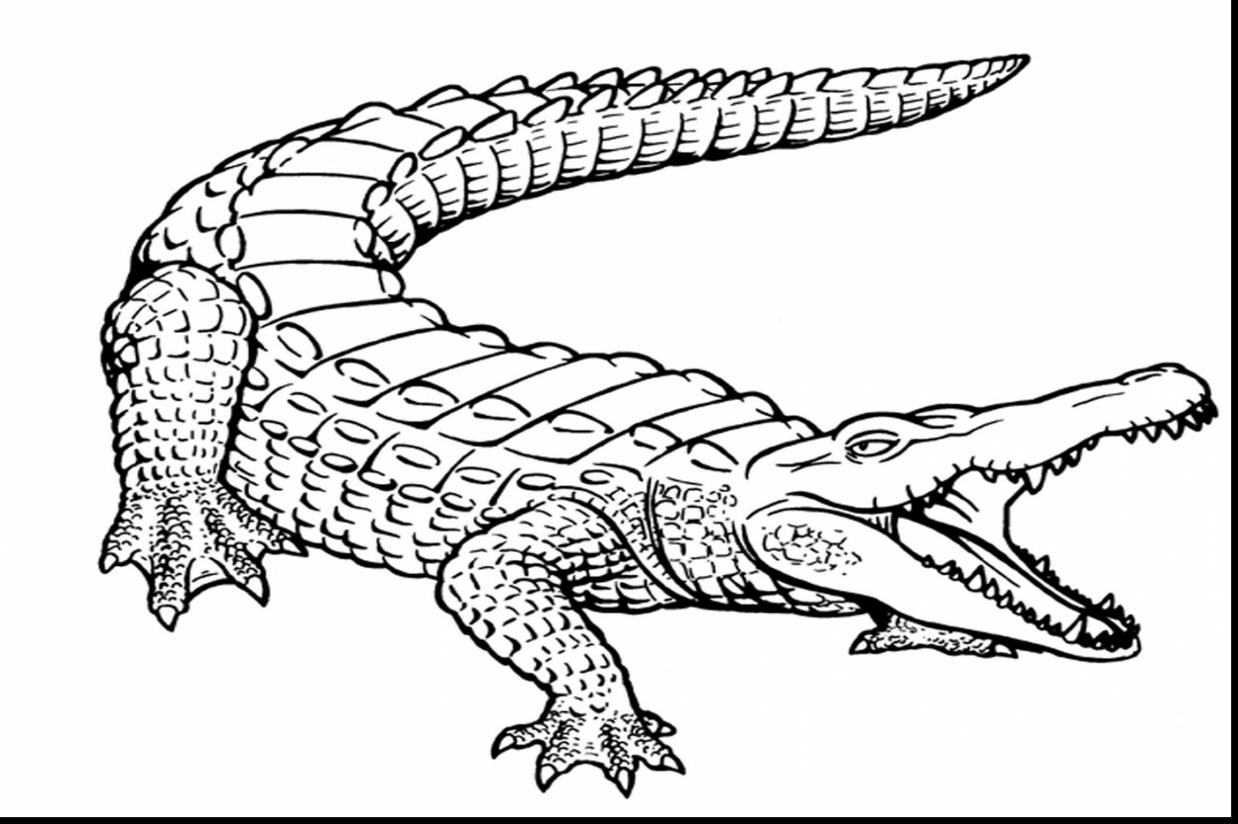 alligator drawing crocodile line drawing at getdrawings free download drawing alligator