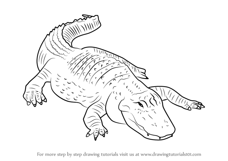 alligator drawing how to draw a realistic alligator step by step drawing drawing alligator