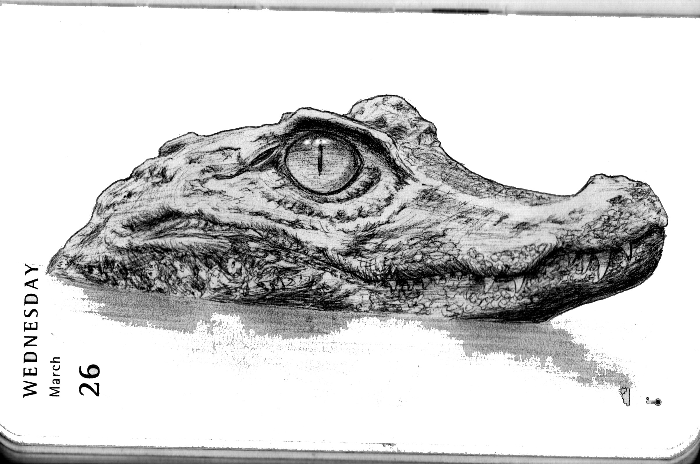 alligator drawing sketchy alligator vector illustration royalty free stock alligator drawing