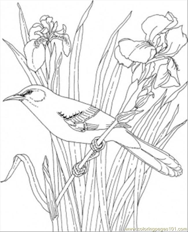 az state bird state birds coloring pages free printable coloring pages bird az state