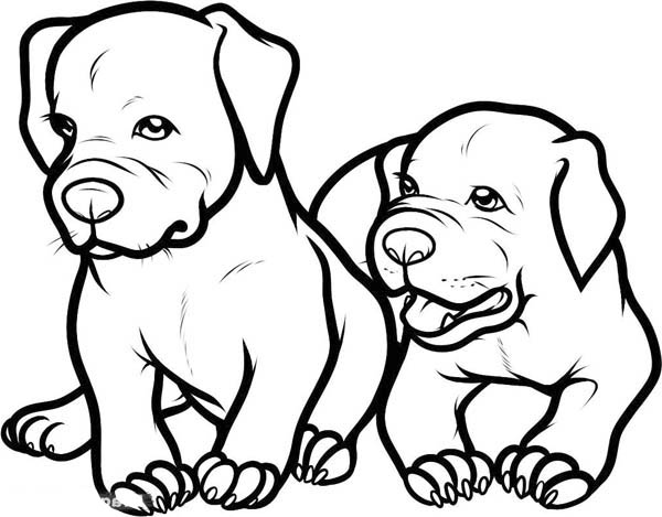 baby dog dog coloring pages two adorable baby pitbull dog coloring page coloring sky coloring baby dog pages dog