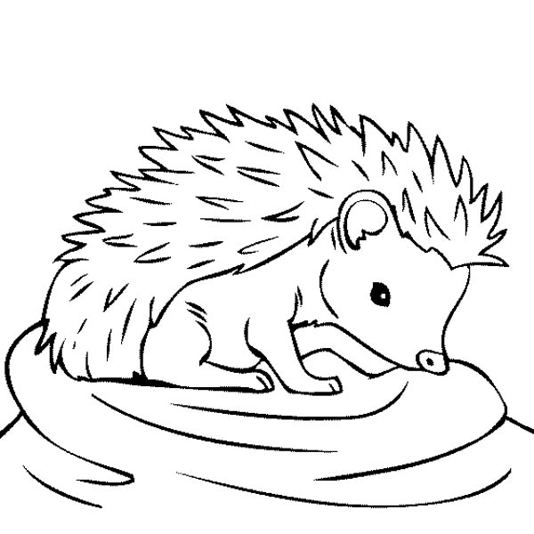 baby hedgehog coloring pages baby hedgehog coloring page these coloring pages are fun hedgehog baby coloring pages