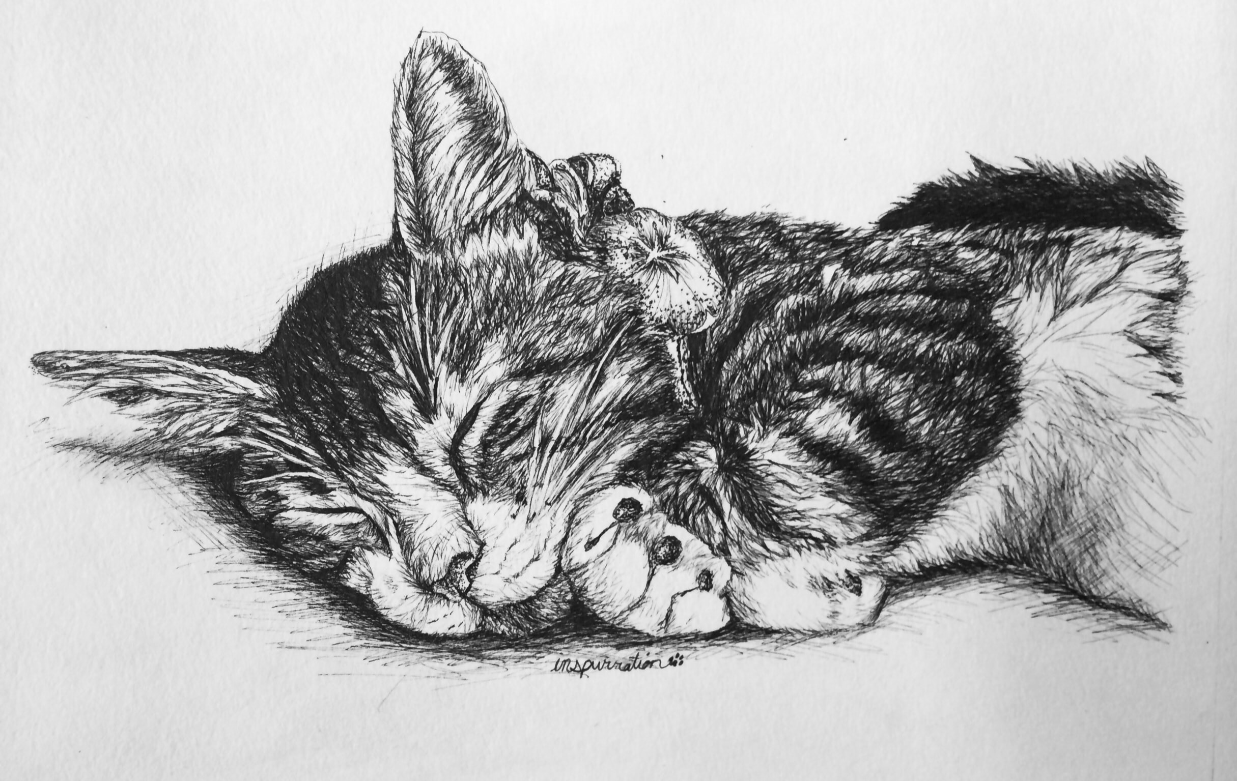 caterpillar drawing how to draw cat eyes step by step pets animals free drawing caterpillar