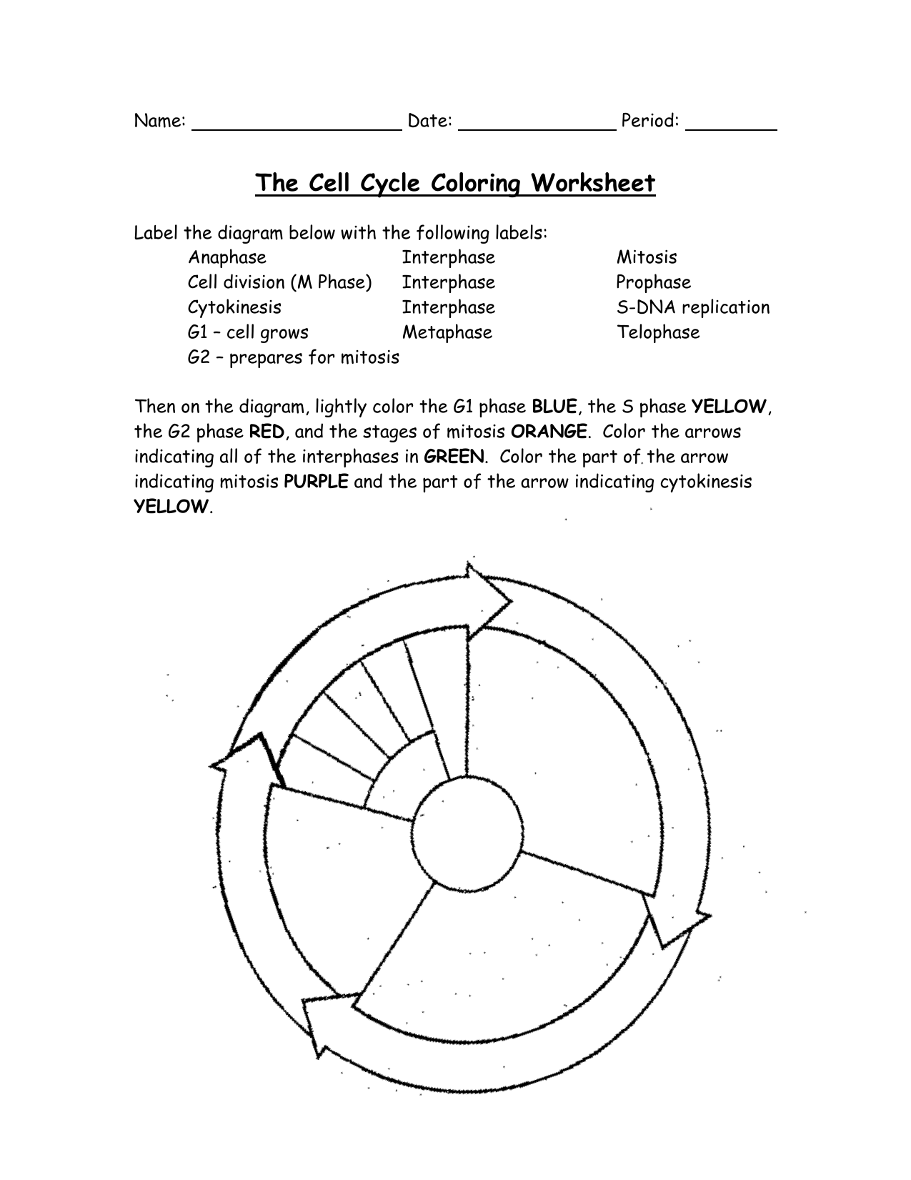 cell cycle coloring worksheet the cell cycle coloring worksheet printable pdf download cycle worksheet coloring cell