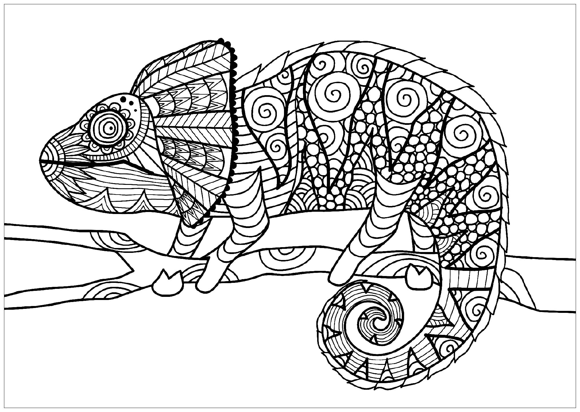 chameleon coloring pictures chameleon coloring pages to download and print for free pictures chameleon coloring