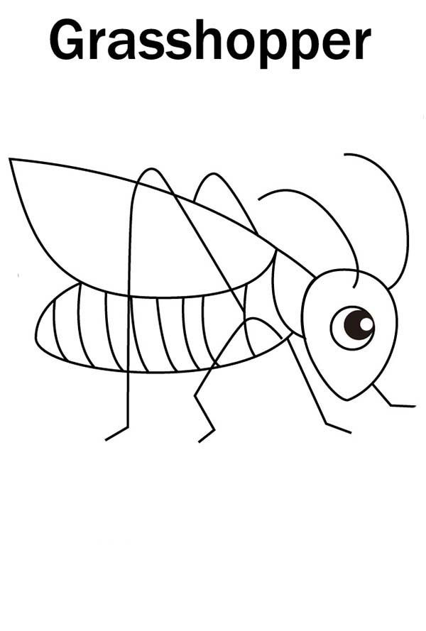 coloring cute grasshopper drawing grasshopper drawing for kids at getdrawings free download cute drawing grasshopper coloring