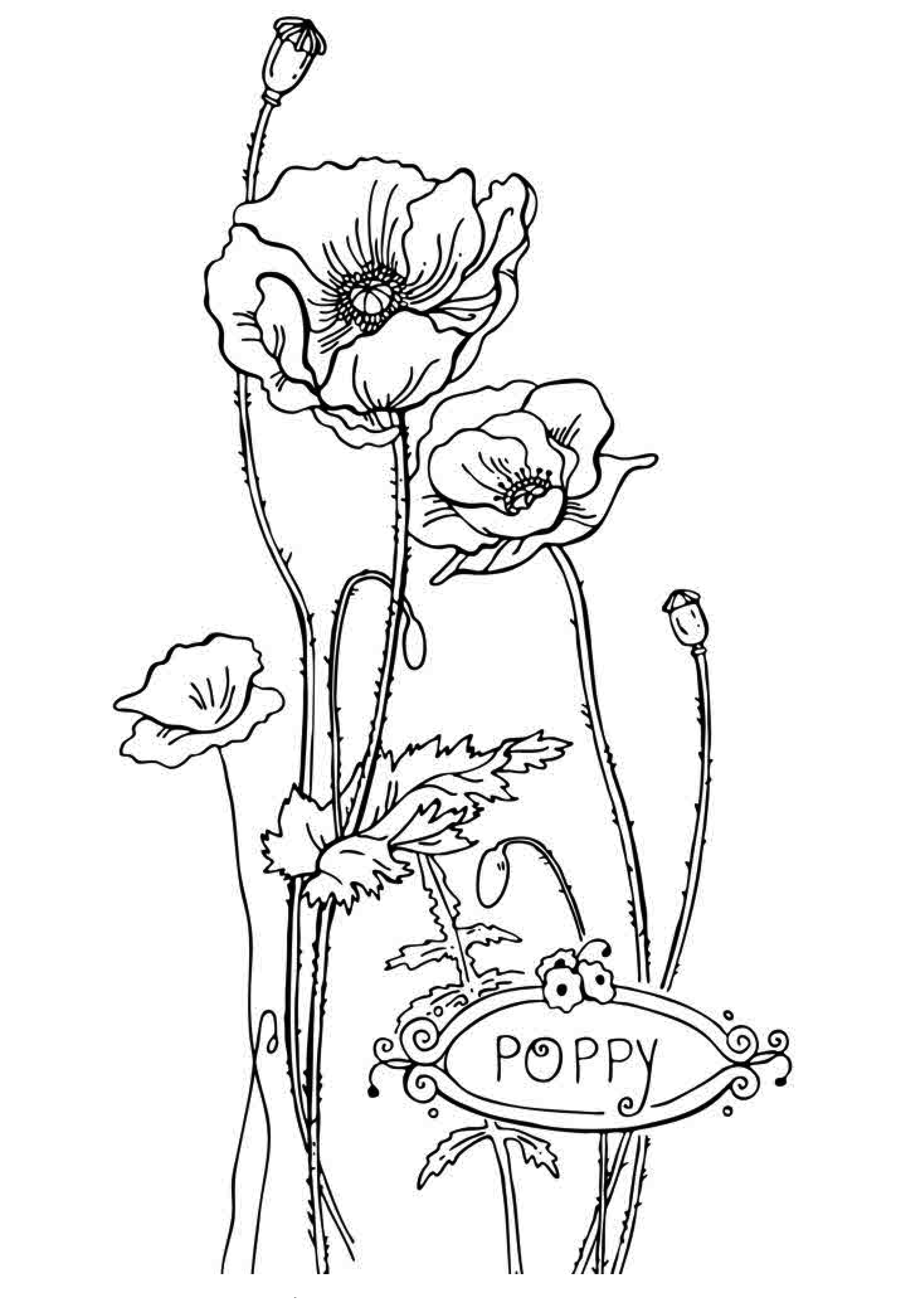 coloring kids pictures free printable flower coloring pages for kids best pictures kids coloring