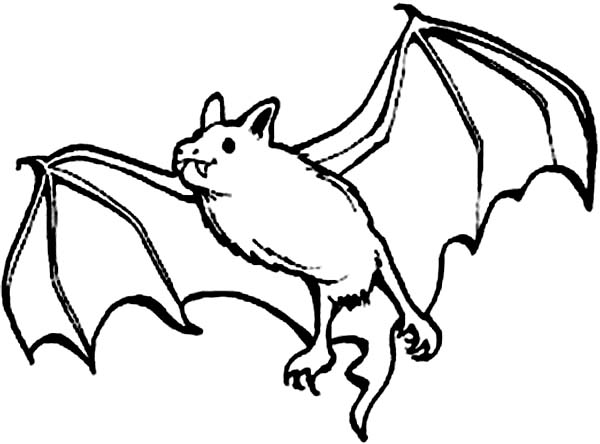 coloring picture bat bat coloring pages to download and print for free picture bat coloring