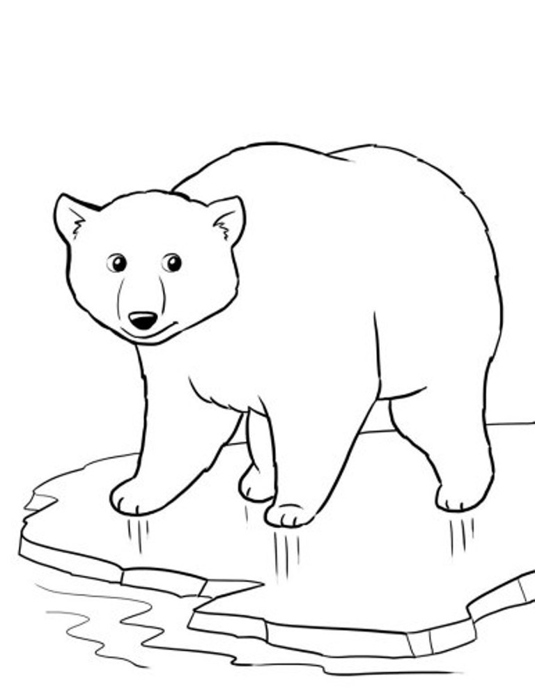 coloring picture bear grizzly bear coloring pages kidsuki bear coloring picture